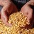Продавам царевица