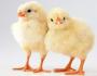 пилета на 1 ден