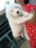 Предлагам Български Овчарски кученца - изгодно