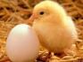 Предлагаме  Инкубатори за всякакав вид яйца