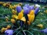 Поддръжка, озеленяване, затревяване и посаждане на растения