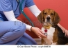 Денонощен ветеринарномедицински център