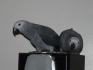 Мъжки и женски африкански сиви папагали