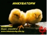 Домашни инкубатори за люпене на яйца - изгодни цени
