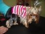 Фъри Мъри - подстригване на кучета и котки