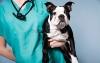 Ветеринарна помощ 24 часа