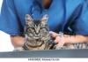 Денонощен ветеринарен център