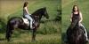 красива Фризийски кон за осиновяване