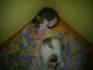 Подаряват се 2 сладки котета