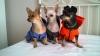 Дрехи за кучета - дъждобран