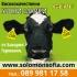 Ушни марки за крави и овце