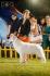 Отлични Швейцарски Бяли Овчарски кученца за продажба