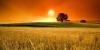 Купува земеделска земя в област Враца, област Монтана и област Плевен