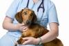 Ветеринарна помощ, Денонощна, Спешна