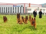 Продавам кученца на Немска Овчарка с високо качество