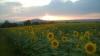 Купува земеделски земи област Враца ,област Монтана и област Плевен