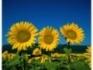 Купувaм земеделска земя на високи цени в  областите  Враца,Монтана ,Плевен, В.Търново,Русе, Силистра,Разград. Плащане веднага след проверка на...