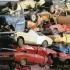Купува стари коли,изгнили коли,повредени коли,ударени автомобили,изгорели автомобили,също бус,джип  и други за...