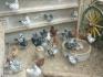 Продавам гълъби от породата Американски Кинг Стандарт кокошоподобен тип